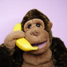 gorillaPhone